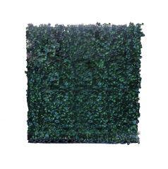Kunsthaag Hedera Helix Woerner 100x100 cm (bxh)