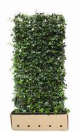 Quick Hedge Hedera Hibernica 100x180 cm.