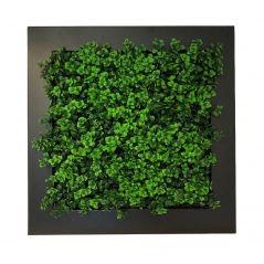Planten schilderij Dikkemanskruid (kunsthaag) 67x67 cm