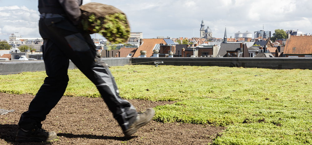 Met de sedummatten van Sempergreen kun je een prachtig groen dak realiseren
