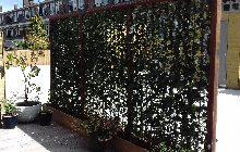 Groene Afscheiding Tuin : Kant en klaar hagen snel voordelig een groene haag