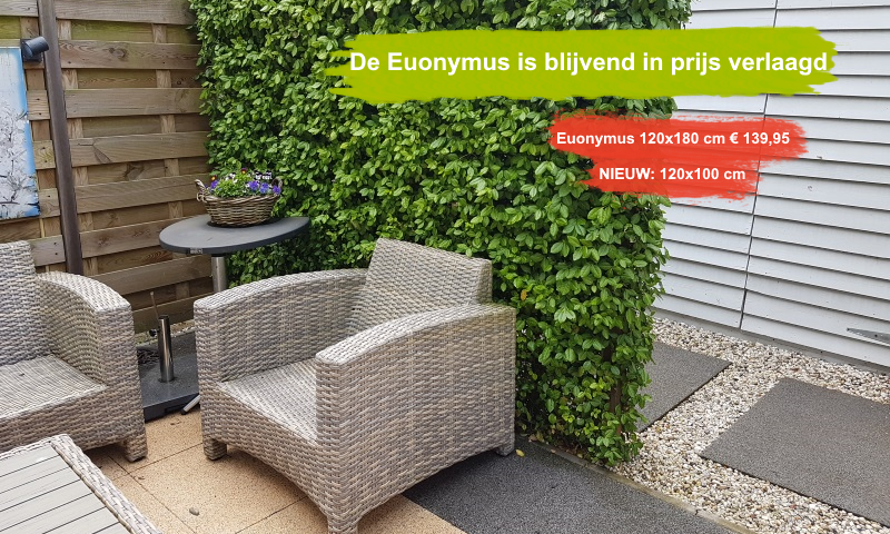Euonymus Dart's Blanket 120x180 cm.