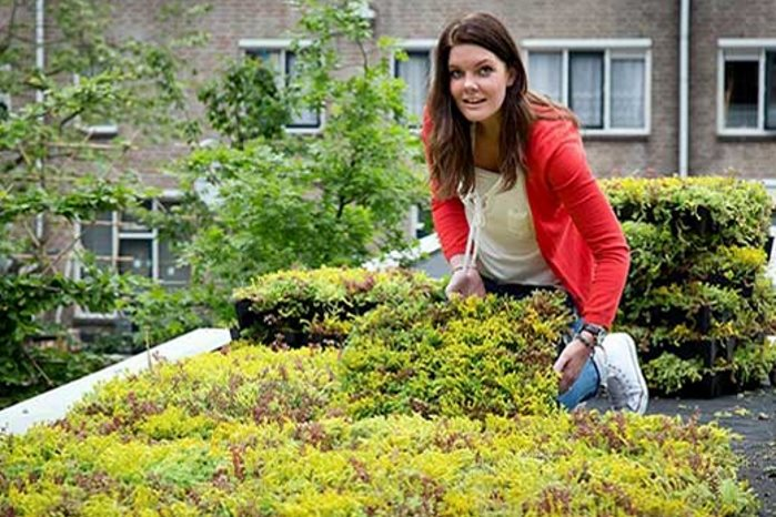 Met de losse Mobiroof casettes van kantenklaarhagen.nl creëer je eenvoudig zelf een groen dak