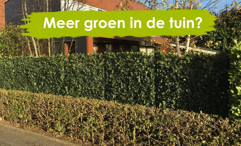 Met een kant-en-klare haag profiteer je direct van meer groen in de tuin