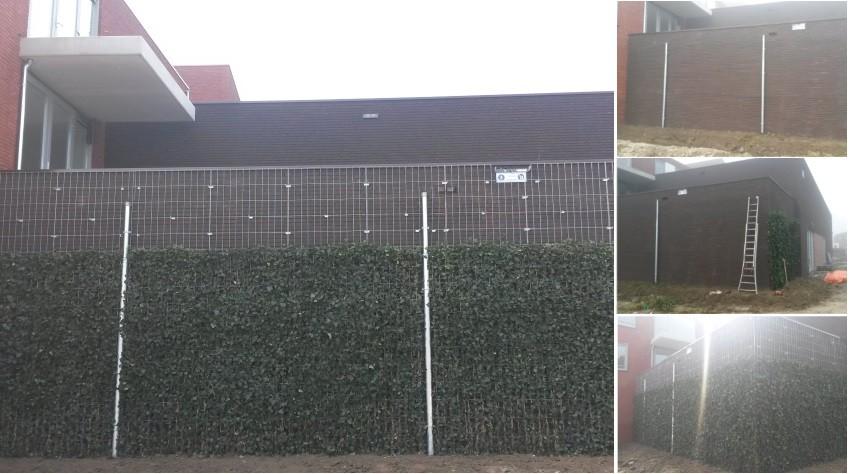 Project met hagen van 3 meter hoog